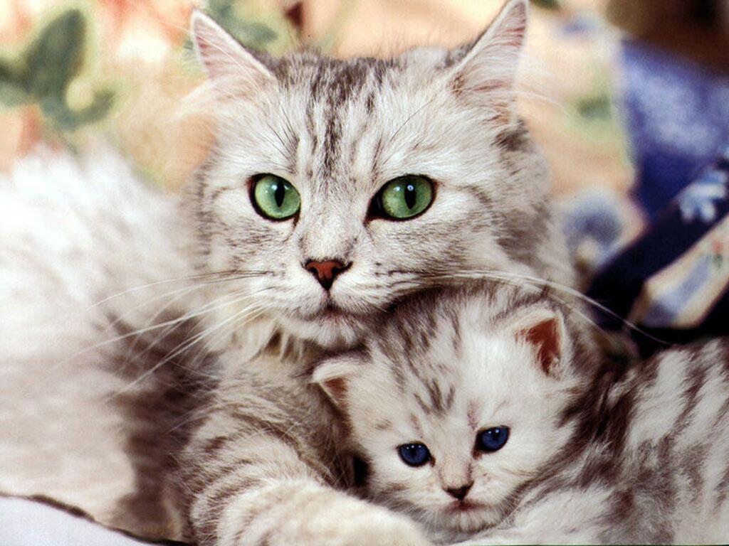 Un site sympa sur le tirage du tarot Chat-et-chaton